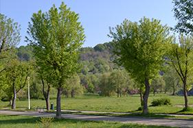 Spaţii verzi şi parcuri