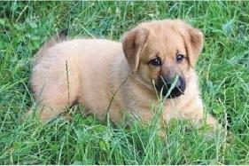 Adopția câinilor fără stăpân